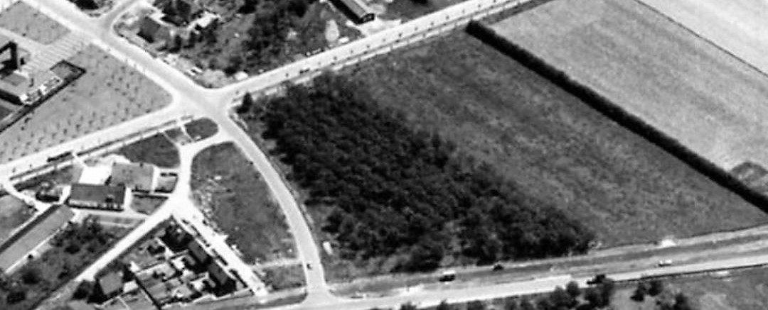kersenboomgaard achter de KODAK in Odijk 1966